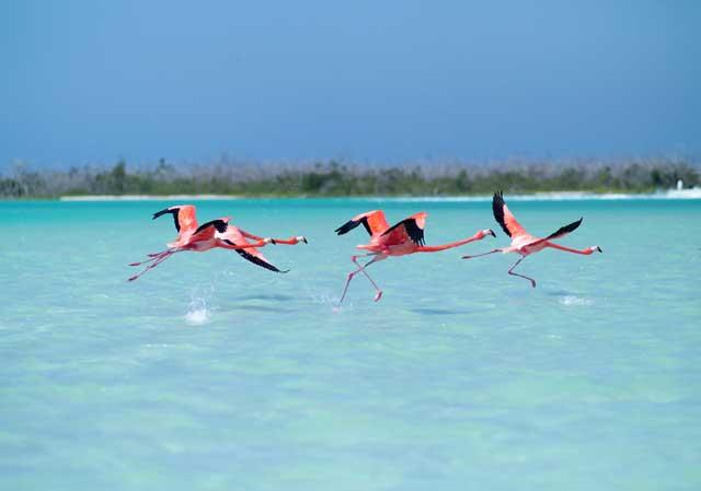 Cancun Foros,Rio Lagartos
