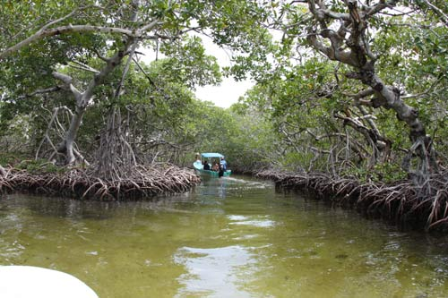 mangroves at sian kaan biosphere